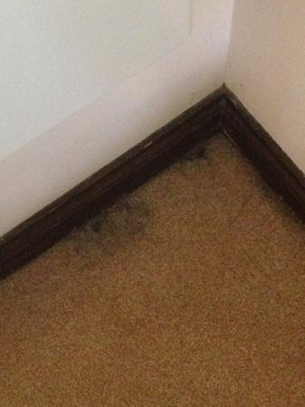 Cheap Steam Cleaning Can Lead To Mouldy Carpet
