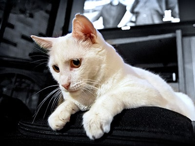 Cats and Preventing Common Carpet Damages